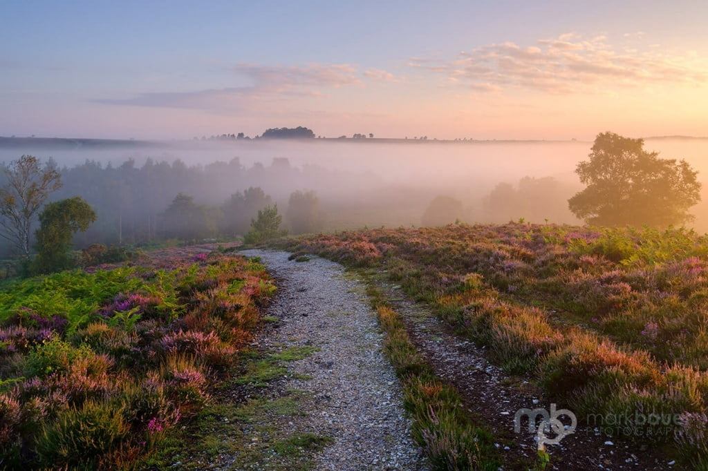 Mark Bauer Photography | LD019 Rockford Common, New Forest