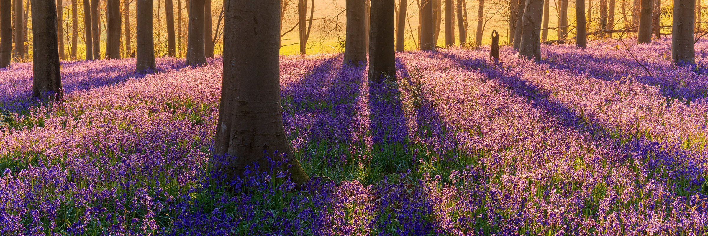 Mark Bauer Photography | Micheldever Bluebells