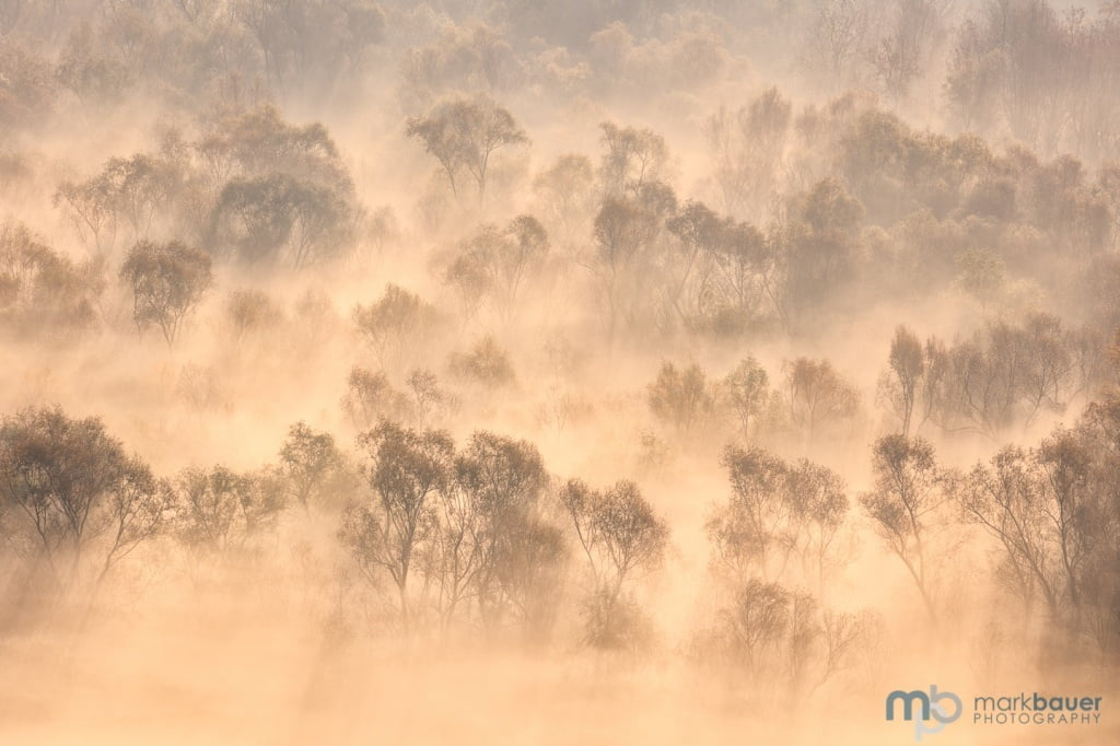 Mark Bauer Photography | Misty Trees, Skadar National Park, Montenegro