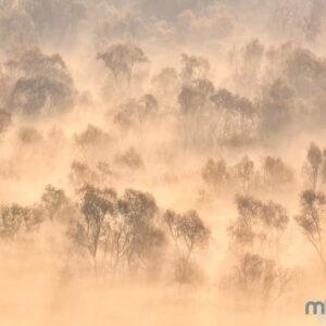 Mark Bauer Photography | Misty Trees, Skadar National Park, Montenegro