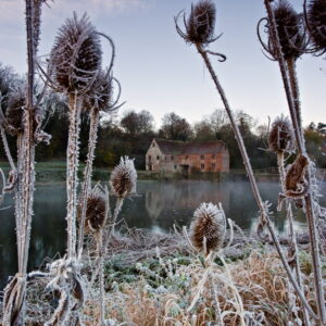 Mark Bauer Photography | First Frost, Sturminster Newton