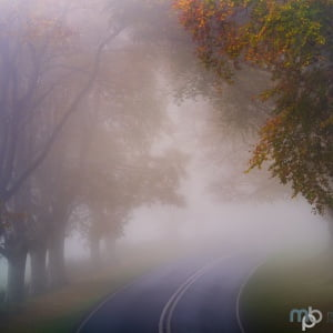 Mark Bauer Photography | A foggy morning, Kingston Lacy Beech Avenue #3