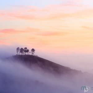 Mark Bauer Photography | Misty Dawn, Colmer's Hill