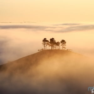 Mark Bauer Photography | Golden Morning, Colmer's Hill
