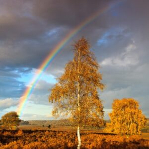 Mark Bauer Photography | Rainbow, Mogshade Hill, New Forest