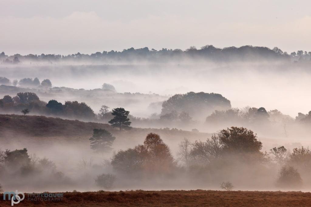 Mark Bauer Photography | Autumn mist, Mogshade Hill, New Forest