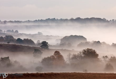 Mark Bauer Photography | Autumn mist, Mogshade Hill, New Forest