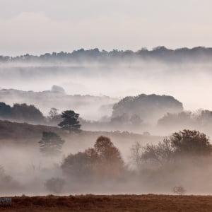 Mark Bauer Photography   Autumn mist, Mogshade Hill, New Forest