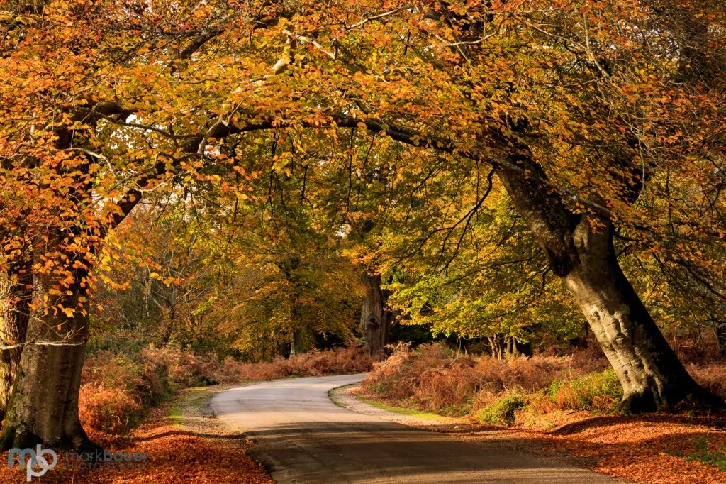 Mark Bauer Photography | Autumn Colours, Bolderwood Ornamental Drive, New Forest