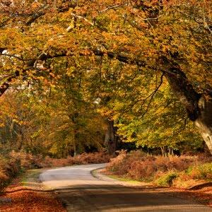 Mark Bauer Photography | Autumn Colours, Bolderwood Ornamental Drive, New Forest