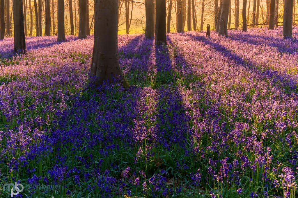 Mark Bauer Photography | Dawn, Micheldever Woods, Hampshire