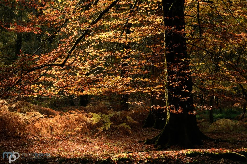 Mark Bauer Photography | Autumn Colours, Rhinefield, New Forest