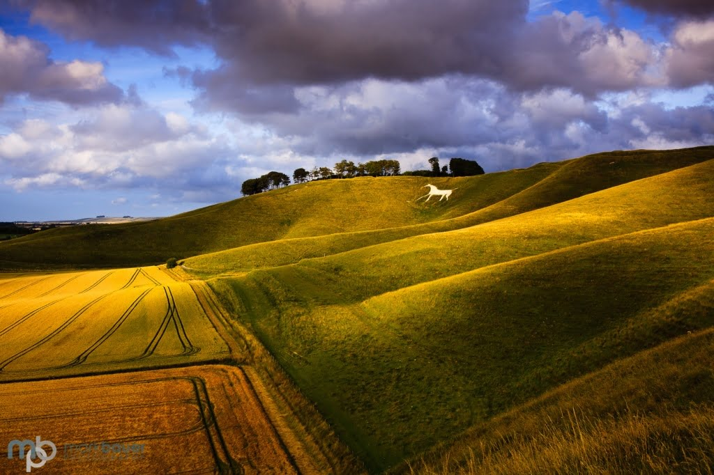 Mark Bauer Photography | Evening light, Cherhill, Wiltshire