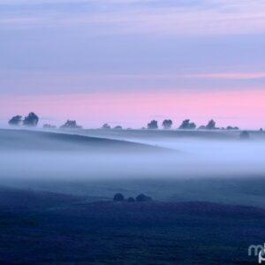 Mark Bauer Photography | Summer mist, Rockford Common, New Forest